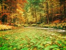 De aard van de herfst Lange schaduwen en blauwe hemel Bergrivier in kleurrijk bladerenbos stock foto's
