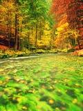 De aard van de herfst Lange schaduwen en blauwe hemel Bergrivier in kleurrijk bladerenbos royalty-vrije stock foto