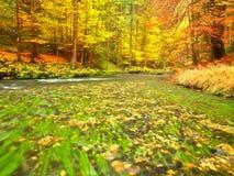 De aard van de herfst Lange schaduwen en blauwe hemel Bergrivier met low level van water, kleurrijke bladeren in bos royalty-vrije stock afbeeldingen