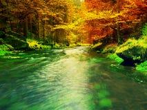 De aard van de herfst Lange schaduwen en blauwe hemel Bergrivier met low level van water, kleurrijke bladeren in bos stock foto