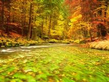 De aard van de herfst Lange schaduwen en blauwe hemel Bergrivier met low level van water, kleurrijke bladeren in bos royalty-vrije stock fotografie