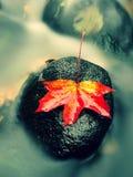 De aard van de herfst Lange schaduwen en blauwe hemel Detail van rot oranjerood esdoornblad Dalingsblad op steen Royalty-vrije Stock Foto's
