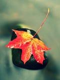 De aard van de herfst Lange schaduwen en blauwe hemel Detail van rot oranjerood esdoornblad Dalingsblad op steen Stock Fotografie