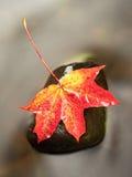 De aard van de herfst Lange schaduwen en blauwe hemel Detail van rot oranjerood esdoornblad Dalingsblad op steen Royalty-vrije Stock Afbeelding