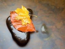De aard van de herfst Lange schaduwen en blauwe hemel Detail van rot oranjerood esdoornblad Het dalingsblad legt op donkere steen Stock Afbeeldingen