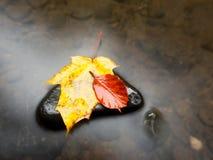 De aard van de herfst Lange schaduwen en blauwe hemel Detail van rot oranjerood esdoornblad Het dalingsblad legt op donkere steen Royalty-vrije Stock Afbeeldingen