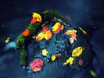 De aard van de herfst Lange schaduwen en blauwe hemel Detail van rot oranjerood esdoornblad Het dalingsblad legt op donkere steen Royalty-vrije Stock Foto's