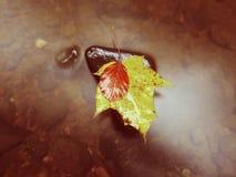 De aard van de herfst Lange schaduwen en blauwe hemel Detail van rot oranjerood esdoornblad Het dalingsblad legt op donkere steen Stock Foto