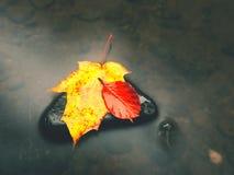De aard van de herfst Lange schaduwen en blauwe hemel Detail van rot oranjerood esdoornblad Het dalingsblad legt op donkere steen Royalty-vrije Stock Foto