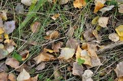 De aard van de herfst Lange schaduwen en blauwe hemel Weinig bruine kikker op een achtergrond van gele bladeren, groen en droog g Stock Fotografie