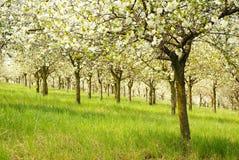 De aard van de lente Stock Afbeelding