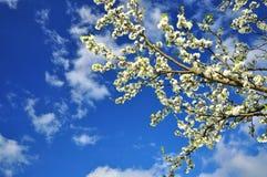 De aard van de lente Royalty-vrije Stock Fotografie