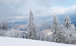 De aard van de winter Stock Foto's