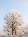 De aard van de winter Royalty-vrije Stock Afbeeldingen