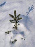 De aard van de winter Stock Fotografie