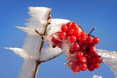 De aard van de winter Stock Afbeeldingen