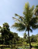 De Aard van Florida Stock Fotografie