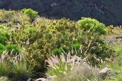 De aard van Gran Canaria, Spanje Royalty-vrije Stock Foto