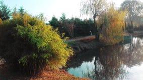 De aard van de herfst Lange schaduwen en blauwe hemel Klein meer in de tuin royalty-vrije stock afbeelding