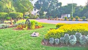 De aard van het de bloemengras van het Wah cntt groen Royalty-vrije Stock Foto