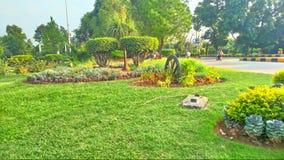 De aard van het de bloemengras van het Wah cntt groen Stock Foto's