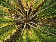 De aard van het de groene installatieblad van de florabloem op bosachtergrond Stock Foto