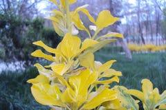 De aard van Nice geel behang als achtergrond voor u stock foto