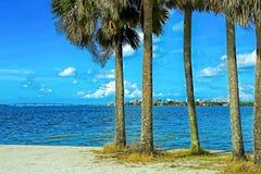 De aard van Sarasota, Florida stock foto's
