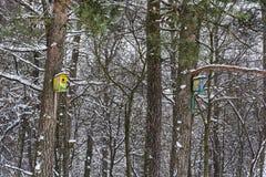 De aard van de winter Vogelhuizen voor vogels in het de winterbos Royalty-vrije Stock Foto's