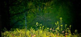 De aardachtergrond van de lente Stock Foto