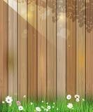 De aardachtergrond van de lente Groene gras en bladinstallatie, Witte Gerbera, Daisy bloemen en zonlicht over houten omheining Royalty-vrije Stock Afbeelding