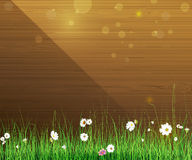 De aardachtergrond van de lente Groene gras en bladinstallatie, Witte Gerbera, Daisy bloemen en zonlicht over houten omheining Stock Foto's