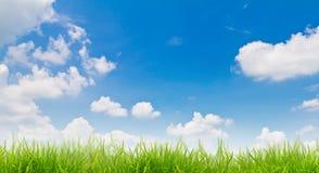De aardachtergrond van de lente met gras stock afbeeldingen