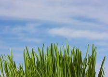 De aardachtergrond van de lente met gras en blauwe hemel Stock Afbeelding