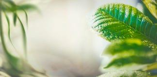 De aardachtergrond van de de zomertijd met groen tropisch bladeren, banner of malplaatje stock foto's