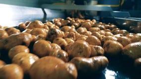 De aardappelknollen bewegen zich langs de vervoerder stock footage