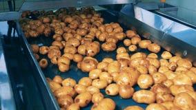 De aardappelknollen stromen langs de vervoerder stock footage