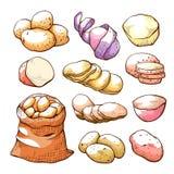 De aardappels overhandigen getrokken reeks, ongekookt landbouwbedrijfvoedsel royalty-vrije illustratie