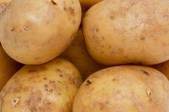 De aardappels sluiten omhoog Royalty-vrije Stock Foto