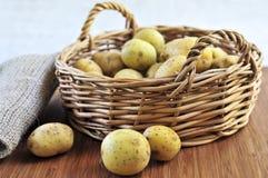 De aardappels van de rij Stock Foto's