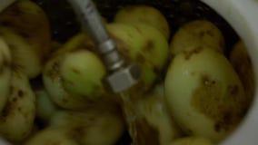 De aardappels worden schoongemaakt in een machine om groenten schoon te maken stock videobeelden