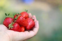 De aardbeien van de handholding stock foto
