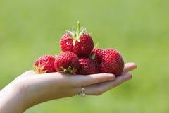 De Aardbeien van de Holding van de hand   Stock Fotografie