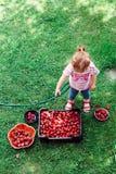 De aardbeien van de meisjewas Royalty-vrije Stock Afbeeldingen