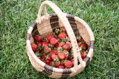 De aardbeien van de tuin in een rieten mand royalty-vrije stock foto