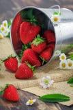 De aardbeien van de voedselfotografie in een klein tin Stock Foto