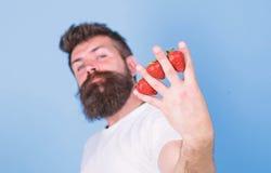 De aardbeien van de mensenbaard hipster tussen vingers blauwe achtergrond Aardbei met het anti-oxyderend die van de vitamine Cvez stock foto