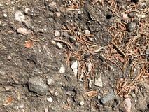 De aarde, dirkt natuurlijke bruine denneappels en afgietselvormen op en kopieert de plaats in het naaldbos tegen de achtergrond stock afbeeldingen