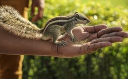 De aardeekhoorn eet zaden van handen royalty-vrije stock afbeeldingen