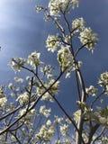 De aardelach in bloemen royalty-vrije stock foto's